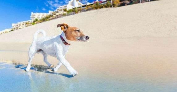 De hondsdagen in de zomer Facebook