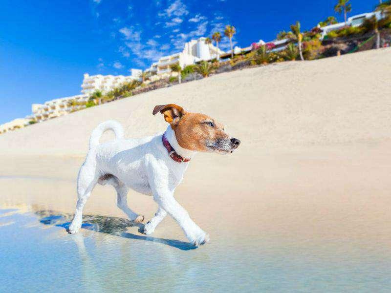 De hondsdagen in de zomer Google plus