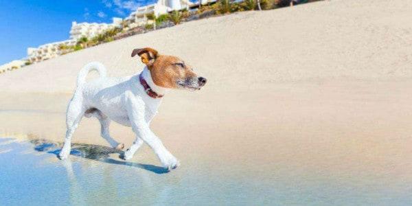 De hondsdagen in de zomer Twitter