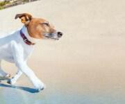 De hondsdagen in de zomer omslagfoto
