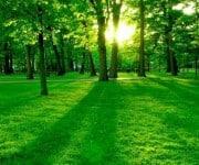 Beter slapen met bomen