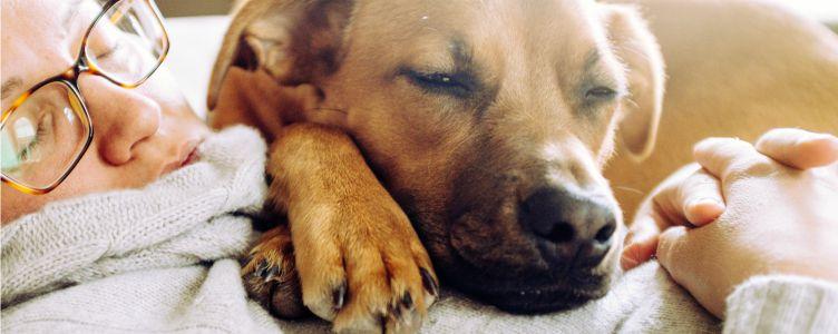 Huisdieren zijn gezond omslagfoto
