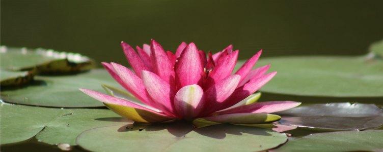 Zen voor de zorg