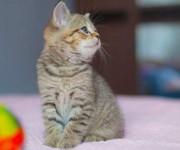 Huisdieren in het verzorgingshuis