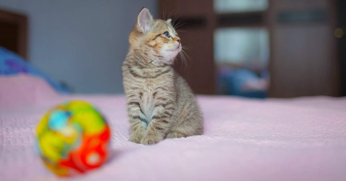Huisdieren in het verzorgingshuis facebook
