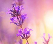 Muggen weghouden met planten