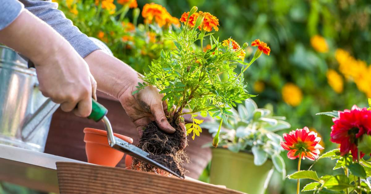 Tuinieren is goed voor je gezondheid facebook