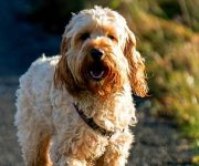 Hond goed voor je gezondheid