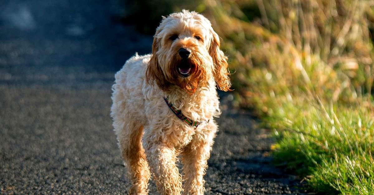 hond-goed-voor-je-gezondheid-facebook