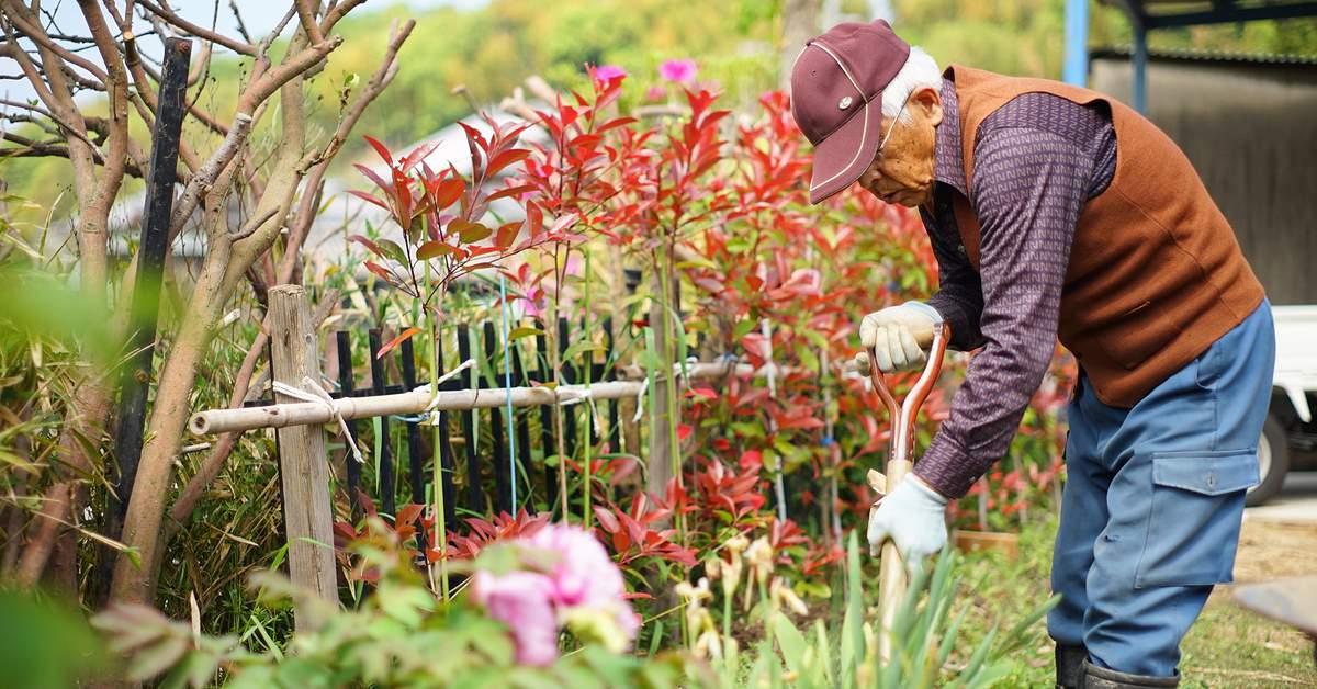groene-initiatieven-voor-thuiswonende-ouderen-facebook