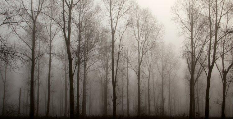 Bomen in de mist foto 1