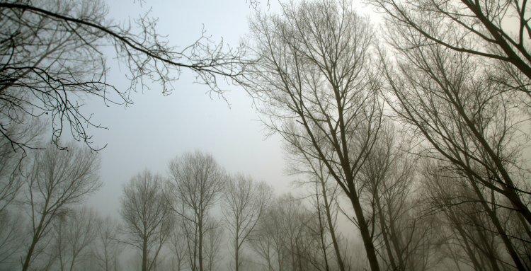 Bomen in de mist foto 2