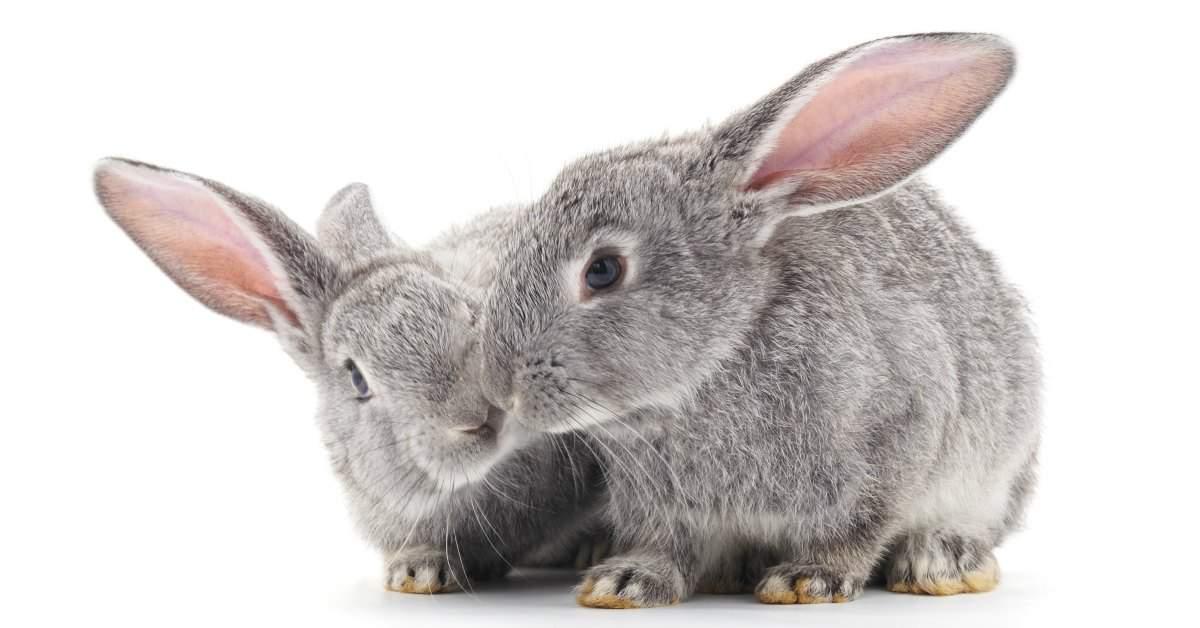 Seks en konijnen facebook