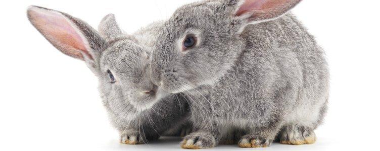 Seks en konijnen