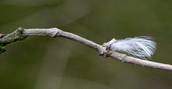 Een veertje aan de boom