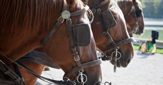 Wensen vervullen met de paardentram