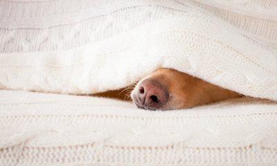 Beter slapen tijdens de herfst