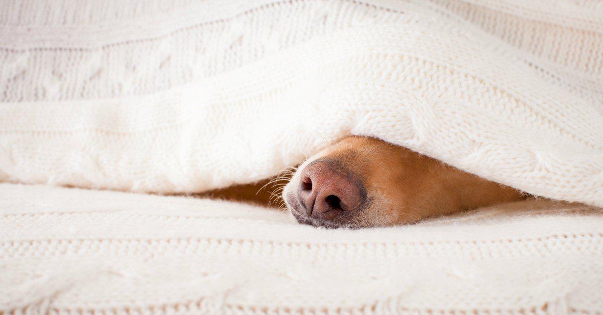 Beter slapen tijdens de herfst facebook