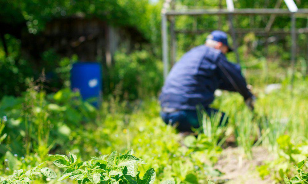 Zorgboerderij voor ouderen met dementie